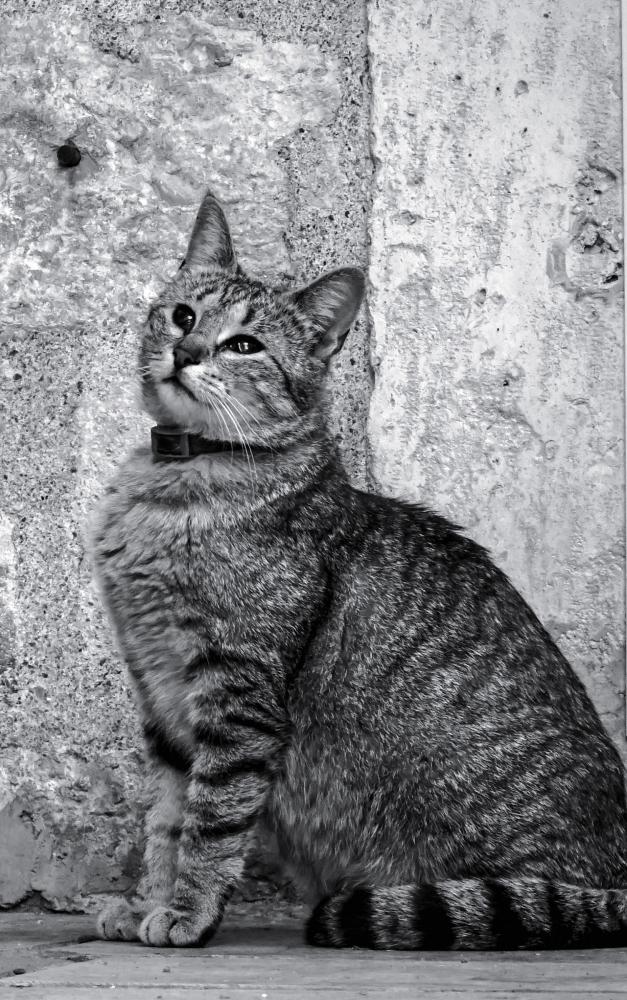 N374 Cat